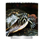 Underwater Turtle Shower Curtain