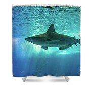 Underwater White Shark Shower Curtain