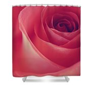 Une Rose D'amour Shower Curtain
