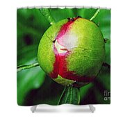 Unexploded Peony Shower Curtain