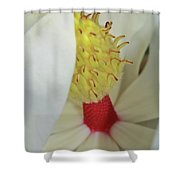 Unfolding Beauty Shower Curtain