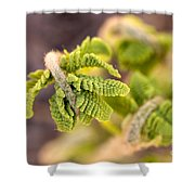 Unfolding Fern Leaf Shower Curtain