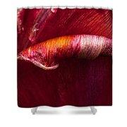 Unfolding Shower Curtain