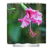 Unfolding Of A Hibiscus Shower Curtain