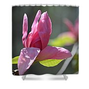 Unfolding - Star Magnolia Shower Curtain