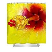 En Garde Shower Curtain