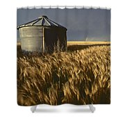 United States, Kansas Wheat Field Shower Curtain