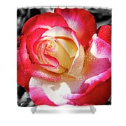Unity Rose Shower Curtain