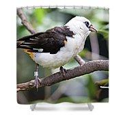 Unknown White Bird On Tree Branch Shower Curtain