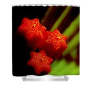 Unlighted Candles Shower Curtain