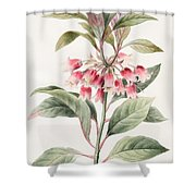 Unnamed Shower Curtain