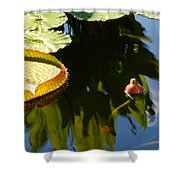 Unopened Water Lily And Reflections Shower Curtain