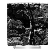 Unrooted Shower Curtain