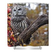 Untitled Owl Shower Curtain