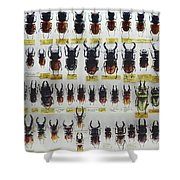 Unusual Pattern Made Out Of Many Stag Beetles Of Different Sizes Shower Curtain