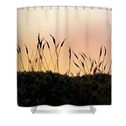 Unusual Sunset Shower Curtain