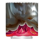 Unveiled Shower Curtain