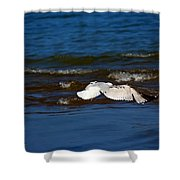 Up And Away Shower Curtain by Amanda Struz