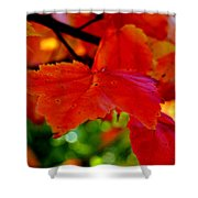 Up Close And Colorful Shower Curtain