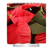 Up Close And Personal Poinsettia  Shower Curtain