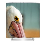 Up Close And Personal With My Pelican Friend Shower Curtain by T Brian Jones