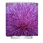 Up Close On Musk Thistle Bloom Shower Curtain