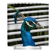Up Close Peacock Shower Curtain