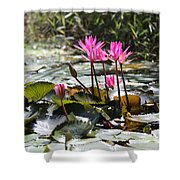 Up Close Water Lilies  Shower Curtain