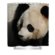 Up Close With A Gorgeous Giant Panda Bear Shower Curtain