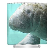 Up Close With A Manatee Shower Curtain