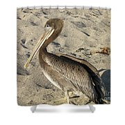 Up Close With A Pelican On A Sand Beach Shower Curtain