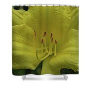 Up-close With A Very Bright Yellow Daylily Flower Shower Curtain