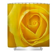 Up Close Yellow Rose Shower Curtain