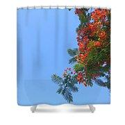 Up- Gulmohar Shower Curtain