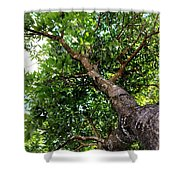 Up The Tree Shower Curtain