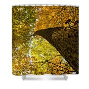 Up To The Top Shower Curtain