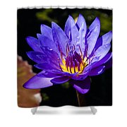 Upbeat Violet Elegance - The Beauty Of Waterlilies  Shower Curtain