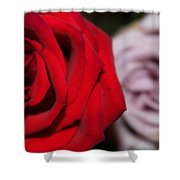 Upstaged Rose Shower Curtain