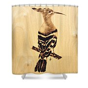 Upupa Shower Curtain by Ilaria Andreucci