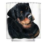 Urso Shower Curtain