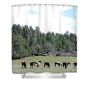 Utah 10 Shower Curtain