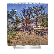 Utah Juniper On The Climb To Delicate Arch Arches National Park Shower Curtain