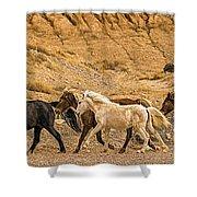 Ute Mountain Wild Horses On The Run Shower Curtain