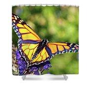 V Shaped Monarch  Shower Curtain