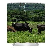 Vacas De Ahuachapan 2 Shower Curtain