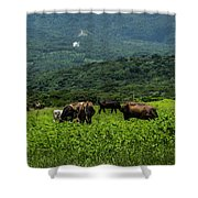 Vacas De Ahuachapan Shower Curtain