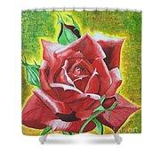 Valentine Rose  Shower Curtain
