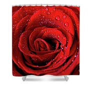 Valentine Swirl Shower Curtain by Tracy Hall