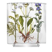 Valerian Flowers, 1613 Shower Curtain