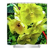 Vanda Orchid Shower Curtain